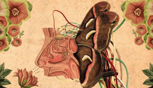 昆虫の嗅覚学習モデルが登場。類似性探索の精度が飛躍的に向上