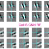 画像を見たときに対する脳細胞の反応をCNNで解析可能に