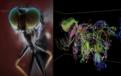 たった1年でここまで進化した…脳神経系の自動再構築、一目瞭然!神経系のモデルを体感可能!