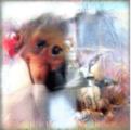 GANを使って猿の脳を活性化させる画像を生成する方法
